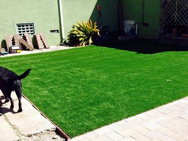 Artificial Grass Photos: Fake Grass Smithville, Georgia Pet Turf, Dogs