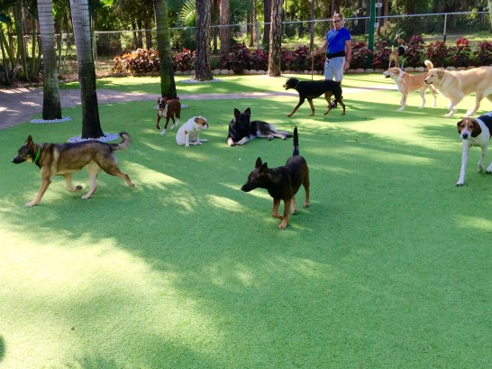 Artificial Grass Photos: Lawn Services Richland, Georgia Dogs, Dogs Runs
