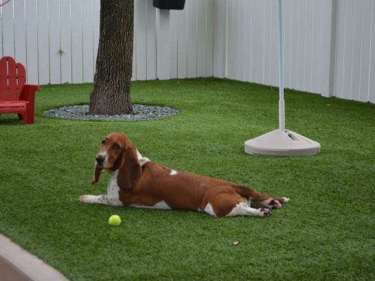 Artificial Grass Photos: Synthetic Grass Trenton, Georgia Grass For Dogs, Dogs Runs