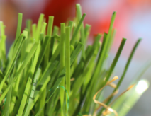 Deals On Artificial Grass